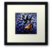 Buzz V Framed Print