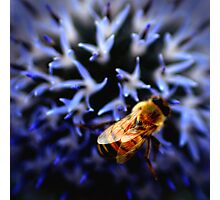 Buzz V Photographic Print