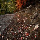 Autumn's Path by Davide Ferrari