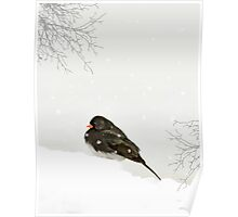 A SPARROW IN WINTER Poster