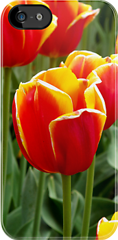 Red Yellow Tulips iPhone cover by Gayle Shaw