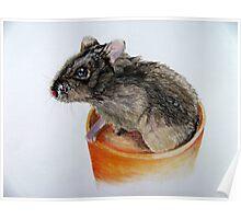 Dwarf Russian Hamster Poster
