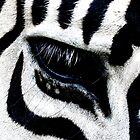 Zebra Striped iPhone Case by Lynda   McDonald