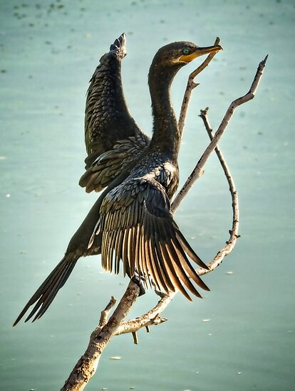 Double Crested Cormorant  by Saija  Lehtonen