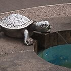 Turtle spout Real del Monte by Richard G Witham