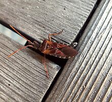 Wood Insect by BioticCrisis