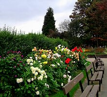 Around The Bench by shelleybabe2