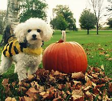 Bella's Ready For Halloween by lorilee