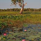 South Alligator River, Kakadu National Park, Australia by Erik Schlogl