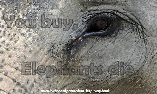 YOU BUY, ELEPHANTS DIE by Betsy  Seeton