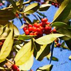 Red Berries and Leaves by Liam Liberty
