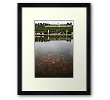 Just a little bit Koi Framed Print
