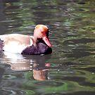 Duck in turbulent water by Arie Koene
