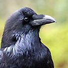 A Big Black Bird by Laurel Talabere
