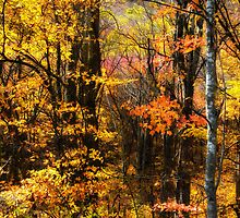 Autumn Leaves by Jane Best