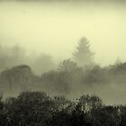 Early morning mist by Firefly4029
