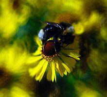 Hey, Honey! by Kasia-D