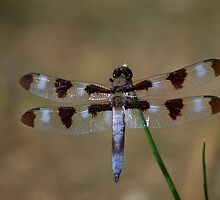 Dragonfly by NewfieKeith