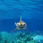SHARK IPHONE CASE 1 by ALIANATOR
