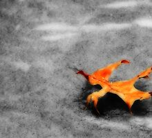 Golden Leaf on Frozen Pond by Shelley Neff