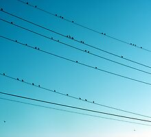 birds on the wire by greeneyedlady