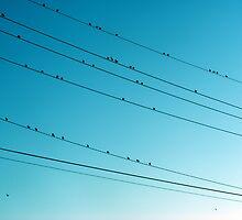 birds on the wire by greeneyedlady