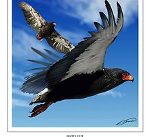 BATELEUR Terathopius ecaudatus (DIGITAL PAINTING NOT A PHOTOGRAPH) by DilettantO