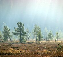 17.10.2011: Autumn's Light II by Petri Volanen