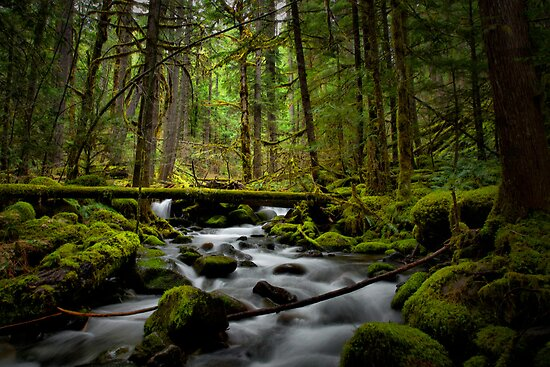 How Green Is Green? by Charles & Patricia   Harkins ~ Picture Oregon