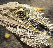 Dragon by MiloAddict