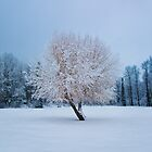 Winter Tree at Riverside Park by Curtis Cunningham
