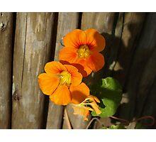 Pretty and Orange Photographic Print