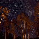 Star Trails Through The Aspens by Paul Gana
