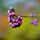 Purple Berries by Erika  Hastings