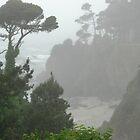 Foggy California cove by Martha Sherman