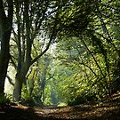 Early Autumn at Rookery Wood by mikebov