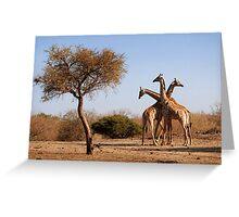 Giraffe combination, Mashatu game reserve, Botswana Greeting Card