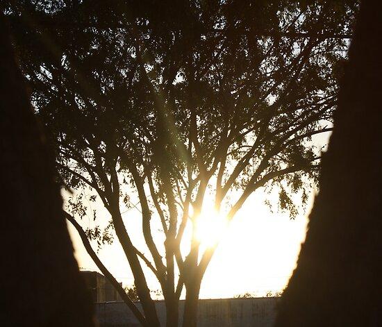 Bright Shadows by Yajhayra Maria