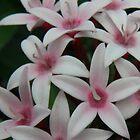 Flowery Goodness by CapturedByKylie