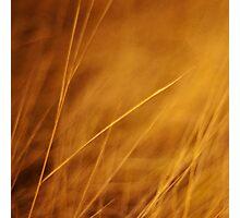 aurum Photographic Print