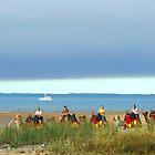 Hervey Bay Camel Beach Ride by Virginia  McGowan