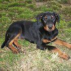 Rottweiller Pup by ariete