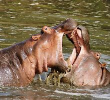 """""""hippo foreplay"""" by roger smith"""