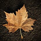 toned leaf by Rod Gonzalez
