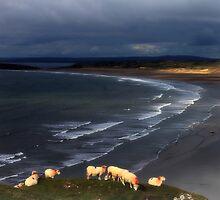 Sheep at Rhosilli Beach 2 by Matt Ware