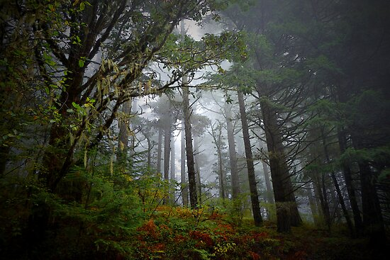 Trees and Fog by Charles & Patricia   Harkins ~ Picture Oregon