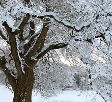Tree in the snow/Coeden yn yr eira by blodauhyfryd