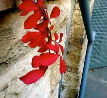Red Leaves by behindsobereyes
