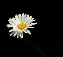 Botanical Simplicity ~ Part One by artisandelimage