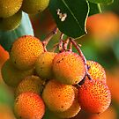 Strawberry Tree Fruits by marens